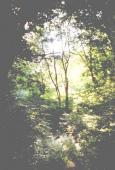 Erdőrész